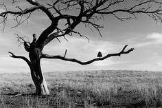 Rémi Noël,Perched on a tree, Texas.Courtesy of the artist.
