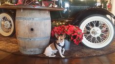 """Jack's first winery is """"Delicato"""" in Lodi, California just before Christmas 2015."""