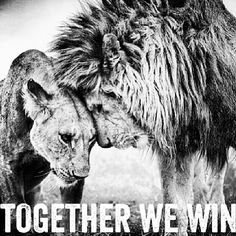 Together we win love quotes couple relationship lion