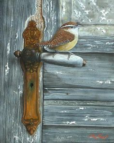 Carolina Wren ... wrens are the sweetest little birds.  But Chickadees are the most endearing, so friendly.