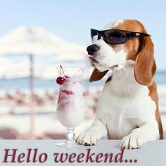 Bon Weekend, Hello Weekend, Happy Weekend, Nice Weekend, Funny Dogs, Cute Dogs, Weekend Images, Puppy Images, Cat Quotes