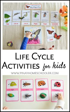 Life cycle activities for kids of all ages. With lots of ideas and material suggestions. #preschool #kindergarten #gradeschool #homeschool #printables #teacherspayteachers #science #lifecycle