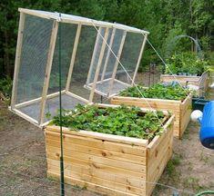 Smart Small Vegetable Garden Ideas On A Budget ~ 49 Smart Small Vegetable Garden Ideas On A Budget ~ Garden cover Small Vegetable Gardens, Veg Garden, Garden Boxes, Easy Garden, Small Gardens, Garden Planters, Vegetable Gardening, Organic Gardening, Fairy Gardens