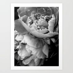 Peony Art Print by Sandi Daniel. Worldwide shipping available at Society6.com. Just one of millions of high quality products available.