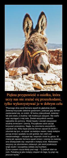 """Piękna przypowieść o osiołku, która uczy nas nie zrażać się przeszkodami, tylko wykorzystywać je w dobrym celu – """"Pewnego dnia osioł farmera wpadł do głębokiej studni. Zwierzę krzyczało żałośnie godzinami, podczas gdy farmer zastanawiał się, co zrobić. W końcu zdecydował: zwierzę i tak jest stare, a studnię i tak trzeba już zasypać. Nie warto więc wyciągać z niej osła. Zwołał wszystkich swoich sąsiadów do pomocy. Wzięli łopaty i zaczęli zasypywać studnię śmieciami i ziemią. Początkowo osioł…"""