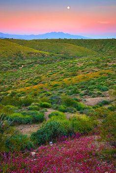 McDowell Mountain Sonoran Desert Preserve, Scottsdale, Arizona