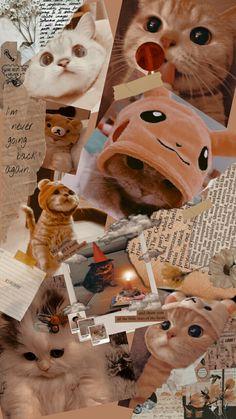 Cute Baby Cats, Cute Baby Animals, Kittens Cutest, Funny Cat Wallpaper, Cute Panda Wallpaper, Panda Wallpapers, Pretty Wallpapers, Pretty Cats, Beautiful Cats