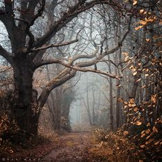 scary photography tree Cool creepy photo landscape trees photograph alone fall nature forest autumn brown road mist leaves landscapes Woods deviantart fog leaf neat Oer-Wout Animals Plants & Nature autumn wood Beautiful Places, Beautiful Pictures, Beautiful Scenery, Nature Pictures, Beautiful Life, Simply Beautiful, All Nature, Nature Quotes, Autumn Nature