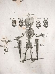Theatrum Anatomicum (https://pinterest.com/pin/287386019949874427), by Caspar Bauhin (https://www.pinterest.com/pin/287386019949818463) and Theodor de Bry (https://www.pinterest.com/pin/287386019949610405), 1605 : Guest Post by Morbid Anatomy's Joanna Ebenstein | Books, Health and History...