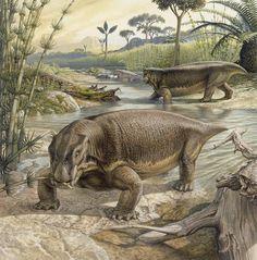 Illustration Of Lystrosaurus Photograph  - Illustration Of Lystrosaurus Fine Art Print   John Sibbick
