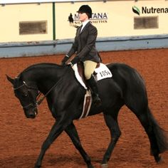 "The hunt seat equitation class, per the AQHA Rulebook, is one that was ""designed for a hunter rider to showcase the ability of both horse and rider through various maneuvers on the flat that lead to a natural progression to classes over fences."" Even though this is clearly stated in the rulebook, riders seem to …"