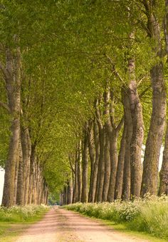 Spring roads - Bredevoort - The Netherlands