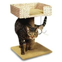 Ware ManufaCounturing CWM11015 Hyacinth and Jute Perch and Play ** You can get more details here : Cat Beds and Furniture