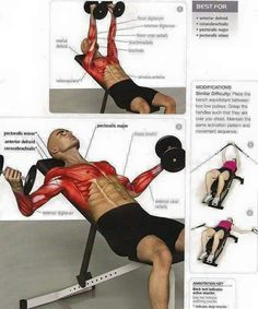 Dumbbell Press Chest Fitness Exercises - Healthy Fitness Plans - Yeah We Train ! Weight Training Workouts, Gym Workout Tips, Dumbbell Workout, Easy Workouts, Fitness Exercises, Fitness Gym, Fitness Workout For Women, Fitness Tips, Workout Posters