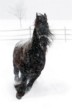 Horse and snow! Ahh