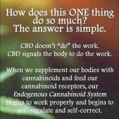 Find out what's all the hype with CBD oils. totally a life changer for me. Happy I made the choice to decide I deserve to feel better. Medical Cannabis, Cannabis Oil, Neuropathic Pain, Endocannabinoid System, Cbd Hemp Oil, Oil Benefits, Health Benefits, Science, Pain Relief