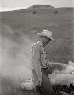 Vintage photo, Montana cowboy branding cattle, 1939.