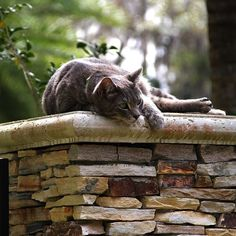 Lazy Cat Days of Summer ...!