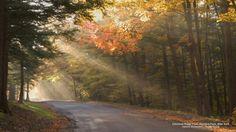 Sunlight and autumn