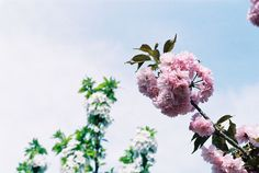 Longtanhu Park  BEIJING