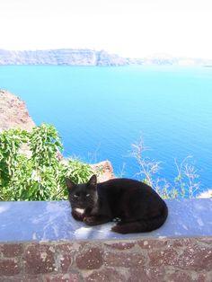 https://flic.kr/p/6s3T1w | Black Cat in Oia | Oia, Santorini Island, Greece