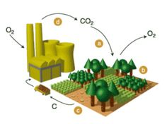 Burning any carbon based fuel converts carbon to carbon dioxide. Unless it is captured and stored, this carbon dioxide is usually released to the atmosphere. Burning fossil fuels releases carbon that was removed from the atmosphere millions of years ago by animal and plant life. This leads to increased concentrations of carbon dioxide in the atmosphere.