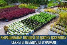Лучшими методиками по улучшению роста овощей являются те, которые основаны на натуральных компонентах. И это доказывает опыт американских фермеров.Зачастую владельцы огородов считают, что если огранич…