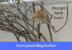 You Cannot Blog Perfect - Blogging Tips http://www.bloggingtips.com/2017/02/11/cannot-blog-perfect/?utm_campaign=crowdfire&utm_content=crowdfire&utm_medium=social&utm_source=pinterest