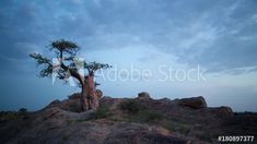 Stock Footage of A linear day to night timelapse on a rocky hill with a majestic Baobab tree silhouetted against the Milky Way night sky, Botswana, Mashatu. Explore similar videos at Adobe Stock Rocky Hill, Baobab Tree, Tree Silhouette, Rock Formations, Milky Way, Night Skies, Geology, Stock Video, Stock Footage
