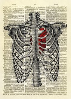 We have combined two antique illustrations - a human rib cage and a human heart into one fantastic image.  The heart has been colorized red. $12.00  YOU WILL RECEIVE A PRINT ONLY. NO FRAME OR MAT IS INCLUDED.  This listing is for an amazing image printed on an upcycled vintage dictionary page. We re...