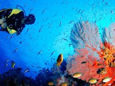 Fly & Sea Dive Adventures Fly & Sea Dive Adventures, founded in is a travel company specializing in scuba diving & adventure vacations. Travel Companies, Scuba Diving, Vacations, Sea, Adventure, Animals, Diving, Holidays, Animales