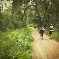 Keep Walking #backpacking #camp #pointreyes #california #woods #trees #trail #sanfrancisco #walking #sleepingmat #sleepingbag #deuter #travelgram #travelandlife #travel #happy #weekend #hiking #hike #rei #REI1440project
