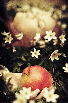 Snow White by Heli Berg
