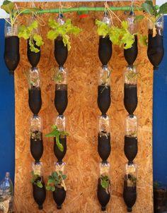 Horta vertical em garrafa PET fixada em OSB