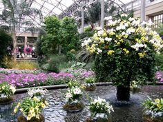 White and yellow #orchid baskets at Longwood Gardens, 2012. - I would love to go back to Longwood gardens for the orchid extravaganza!