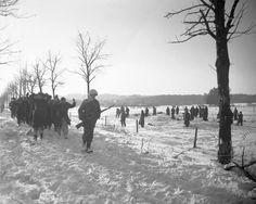 Baugnez - Malmedy Décembre 1944 - Une colonne de prisonniers Allemand passe devant le site du massacre où l'on identifie toujours les victimes ...