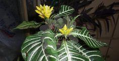 Não Perca!l Plantas de sombra e fáceis de cuidar, para sua casa! - # #dicasdejardinagem #plantas