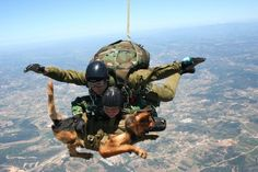 Parachuting war dogs are now making secret missions to Afghanistan - By Tom Ricks Military Working Dogs, Military Dogs, Police Dogs, Military Service, Military Photos, Military Police, War Dogs, Service Dogs, German Shepherd Dogs