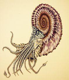 Spiral nautiloid, color image by Parsons.deviantart.com on @DeviantArt