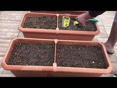 Saksıda Maydanoz ve marul ekimi - YouTube Flower Vases, Flower Arrangements, Flowers, Parsley, Flower Decorations, Lettuce, Gardening Tips, House Plants, Farmer