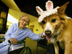 Pets Keep the Elderly Independent: pets can positively impact the overall well-being of seniors. In an NIH study, elderly pet owners living at home had greater independence and mobility than others. Having visiting or residential dogs in nursing homes shows therapy dogs provide comfort, independence and companionship for residents. Animal therapy for the elderly has shown to be effective in pain management and reducing anxiety and aggression in patients with dementia.