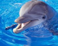 Sign the Petition: Germany - Close the Last Four Dolphinariums