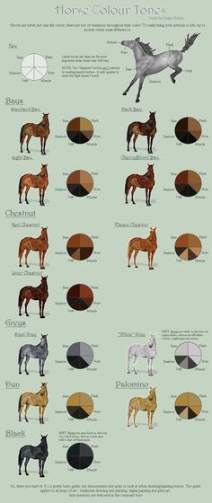 Horse Color Chart, Colour Chart, Horse Coat Colors, Horse Markings, Bay Horse, Horse Head, Horse Facts, Chestnut Horse, Horse Breeds