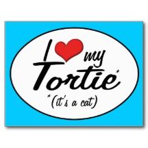 It's a Cat! I Love My Tortie Postcard. I have a tortie dilute. Her colors are that of a tortie but just not so bright. Cat Love, I Love Dogs, Puppy Love, Crazy Cat Lady, Crazy Cats, Gato Calico, Calico Cats, Leopard Dog, Brown Cat