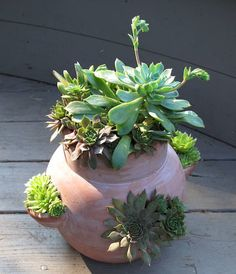 Succulents in strawberry pots
