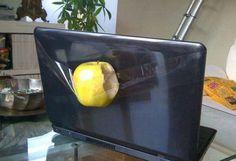 Apple laptop - SunnyLOL
