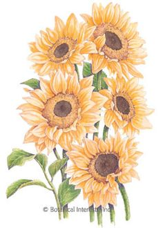 Botanical Interests High Quality Seeds and Garden Products Growing Seeds, Growing Plants, Small Flowers, Cut Flowers, Cut Flower Garden, Flower Gardening, Leather Carving, Seed Packets, Garden Seeds