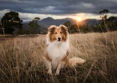 allanimalsunited: little-fox-adventures: Pablo follow me for...