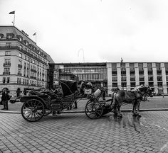 Horses Photograph - The Carriage Horses by Cuiava Laurentiu Brandenburg Gate, Canvas Prints, Framed Prints, Weekender Tote, Wood Print, Beach Towel, Antique Cars, Berlin, Photograph