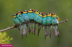 Pandas, Funny Birds, Funny Animals, Cute Animals, Beautiful Birds, Animal Photography, Parrot, Moose Art, Wings